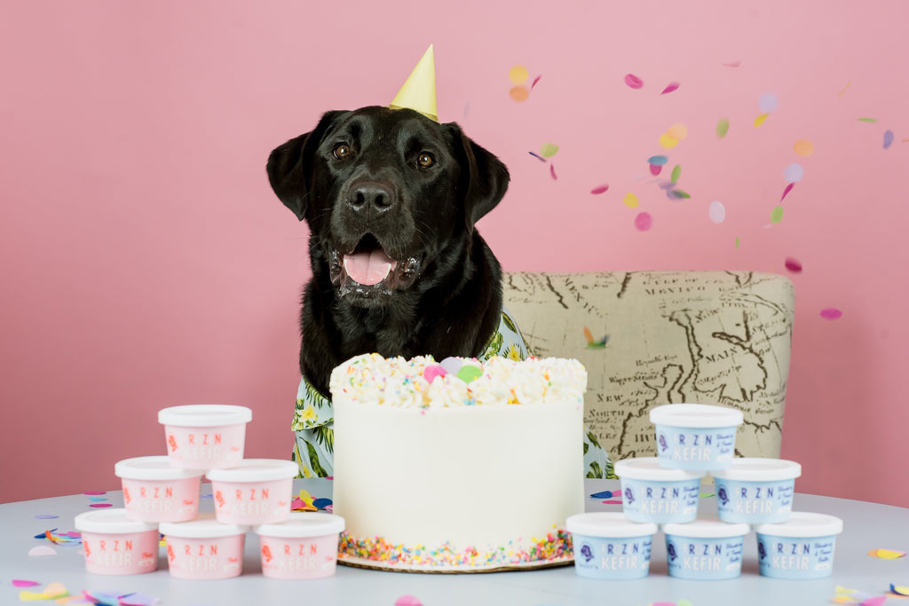 How to Throw an Epic Birthday Party for Your Dog