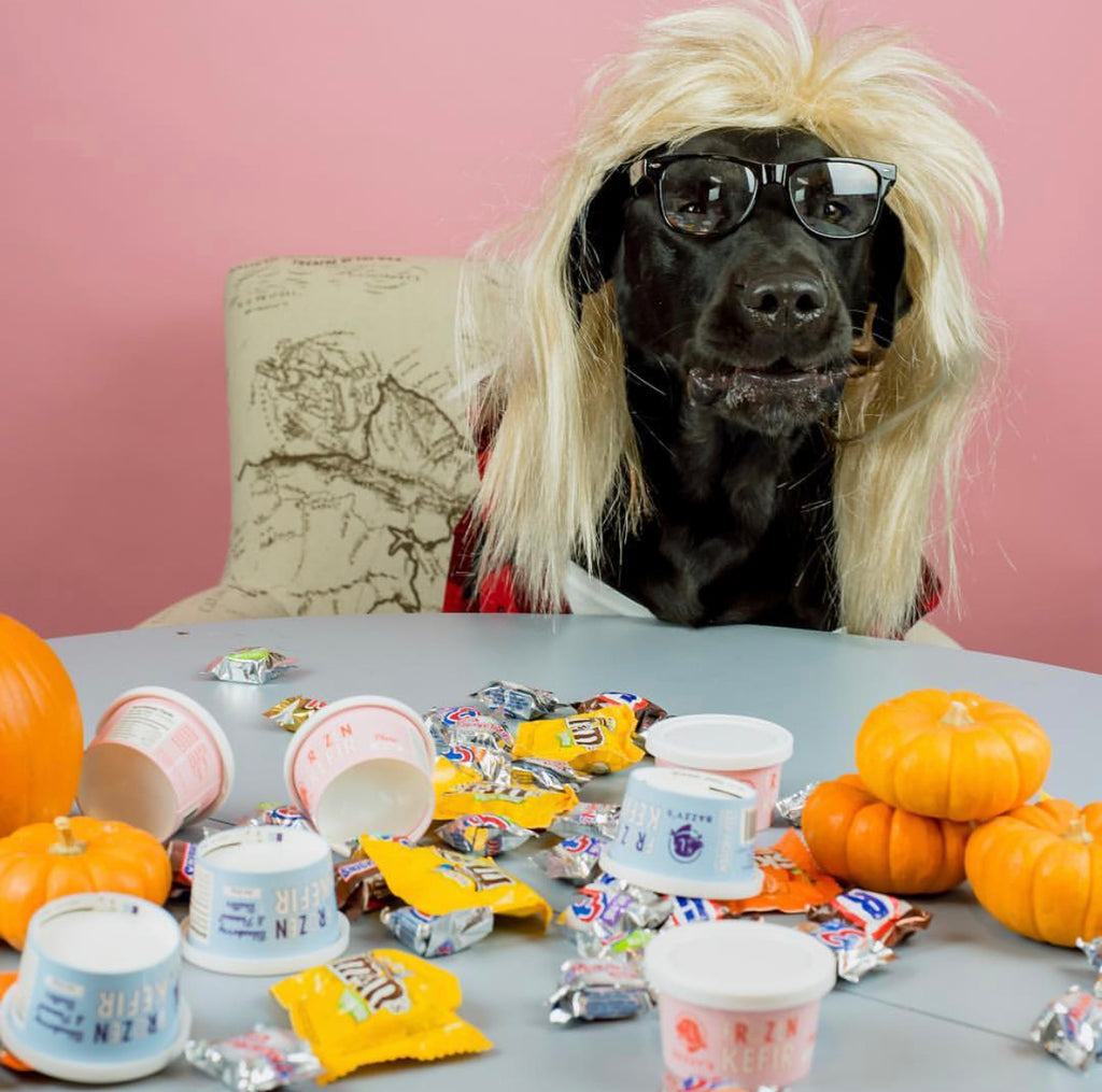 Healthy & Fun Halloween Treat Ideas for Your Dog