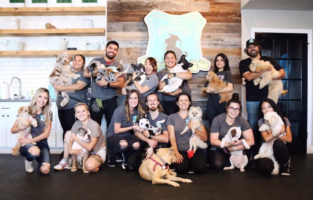 Puppy Training 101: An Interview with The Puppy Academy in Hermosa Beach