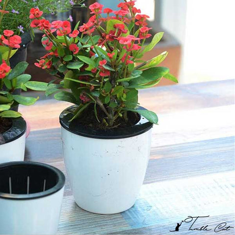 Self Watering Flower Pot