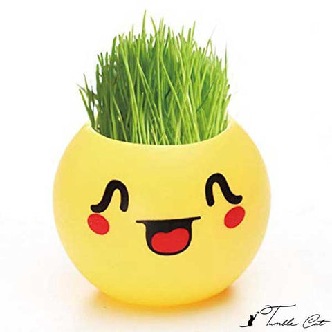 Cat Grass Seeds