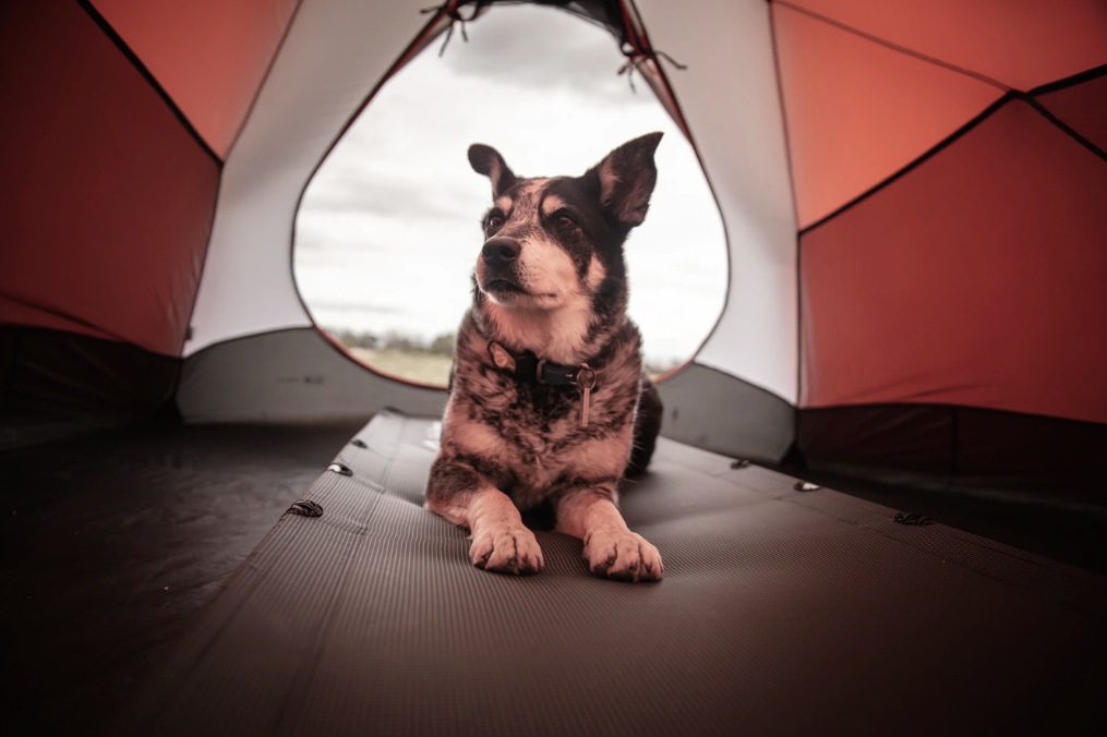 Joys of Taking Your Dog Camping