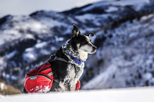 Backcountry Checklist for Adventure Dogs