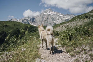 Keep the Trails Pet Friendly By Following Dog Hiking Etiquette