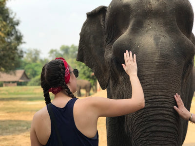 Chiang Mai Elephant Tour 7 Days