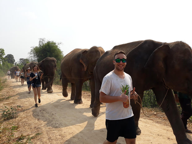 Elephants in Surin