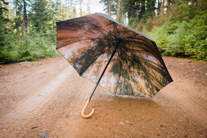 Redwoods Umbrella