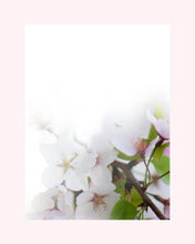 Load image into Gallery viewer, Sakura (Cherry Blossom) Print - Set of 3