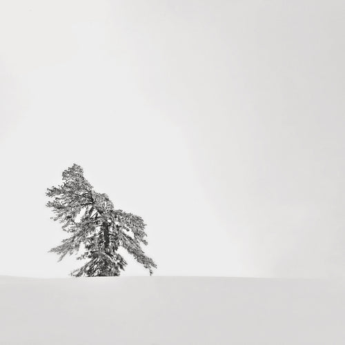 Square Mounted Print - Solitary Tree in Yosemite's Backcountry