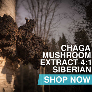 Chaga Mushroom Extract 4:1, Siberian Powder OR Capsules