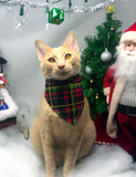 Lumberjack Cat (Xmas Edition)