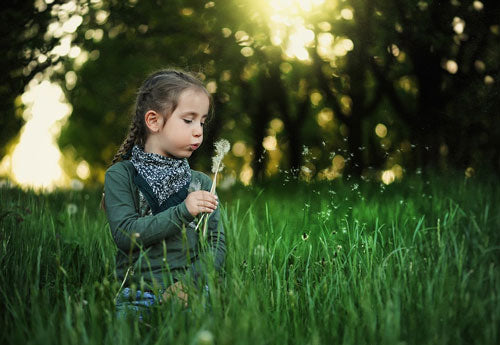 Young girl blows dandelion seeds while sitting in green field