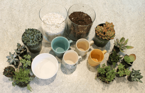 Mother's Day Gift Idea – Succulents