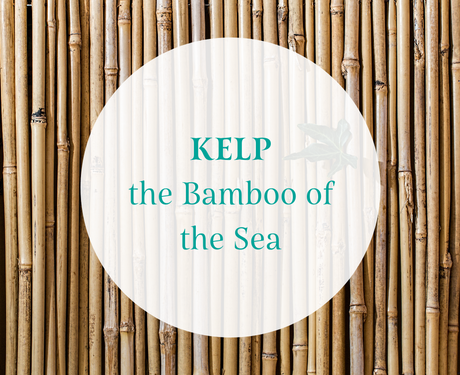 Why Bamboo Sheets? Why Kelp Jerky?