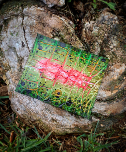 "Rainbow Trout | Hand-dyed Alligator Skin Panel | 4"" x 3.5"""
