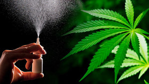 Cannabinoids No Help for Cancer Pain, Concludes Meta-Analysis