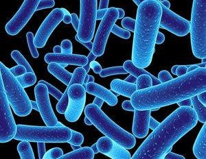 Cannabidiol helps fight antibiotic-resistant bacteria