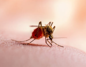 Iron overload, variant gene and malaria resistance linked in African study