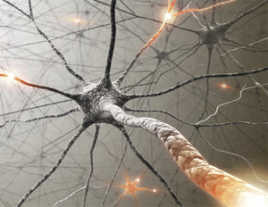 Regulating neuronal lipid metabolism helps axon regeneration after injury, study finds