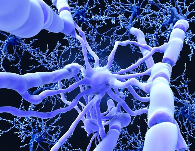 Nerve insulation renewed to create long-term learning