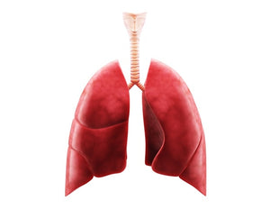 A comprehensive review of COVID-19's effect on organ systems outside the lungs