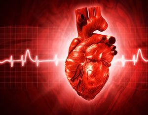 MCG scan shows promise in evaluating chest pain for acute coronary artery syndrome