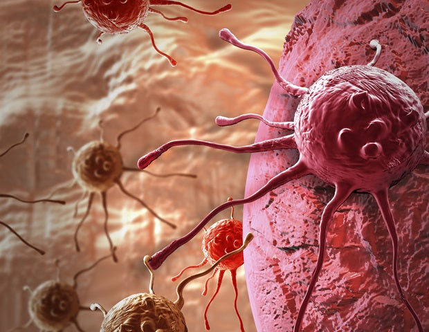 A two-drug combo that halts growth of cancer cells discovered