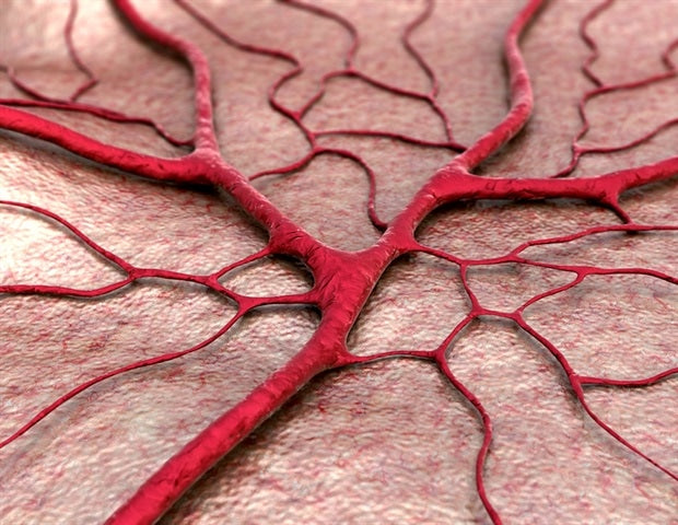 Blood vessels in women age quicker than men's