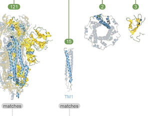 Analysis of the SARS-CoV-2 proteome via visual tools