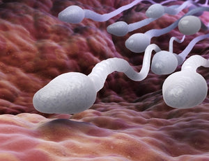 Robotic search for drugs that block sperm motility
