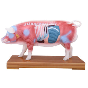 66fit Pig Acupuncture Model