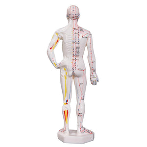 66fit Acupuncture Male Model - 26cm