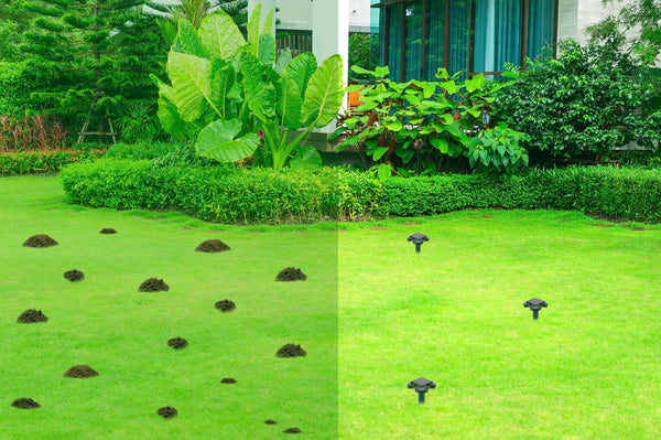 Solar Mole Repellers take care of your lawn