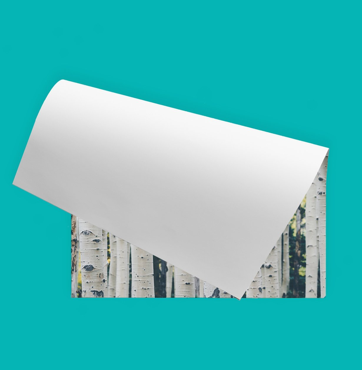 Custom Wall Decal Poster Prints: Wall Decor Stickers
