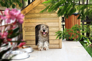 How to Control the Temperature in Your Dog House