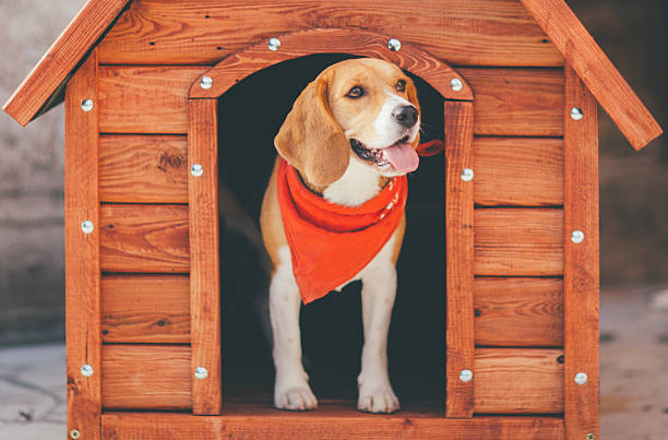 5 Things to Consider When Buying a Dog House