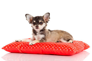 3 Important Things to Keep In Mind About Dog Beds and Pillows