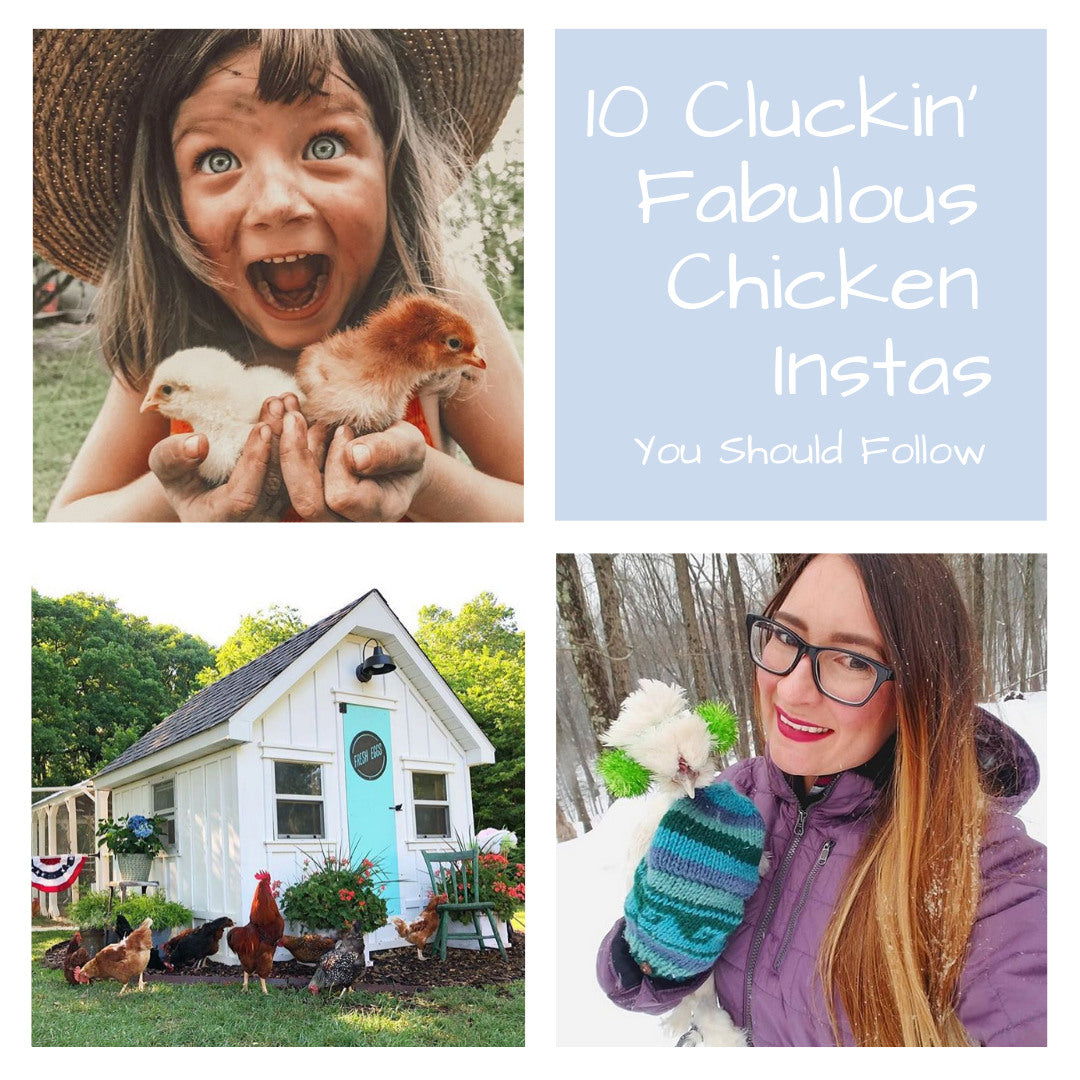 10 Cluckin' Fabulous Chicken Instas You Should follow