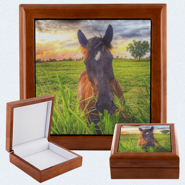 Majestic Horse Jewelry Box