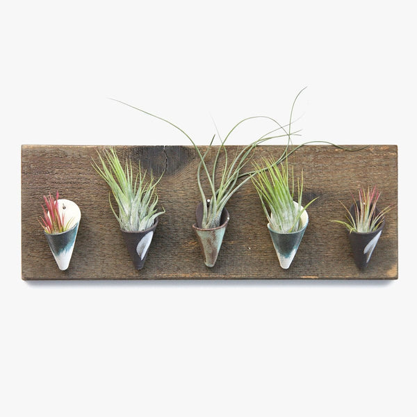 Mini Air Planters Variety Board