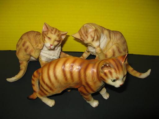 3 Orange Cat Displays