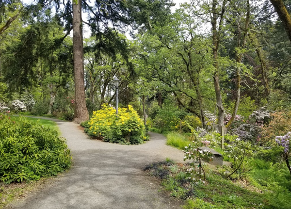 Hendricks Park is a great slice of nature where you can take a stroll, enjoy a picnic, or just hang with friends 420 style.