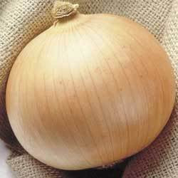 250 Sweet Walla Walla Onion Allium Cepa Vegetable Seeds