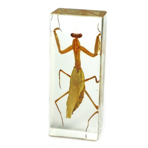 Praying Mantis Paperweight (1 5/8 X 4 3/8 X 1 1/8 )