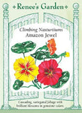 Nasturtium - Climbing Amazon Jewel Seeds
