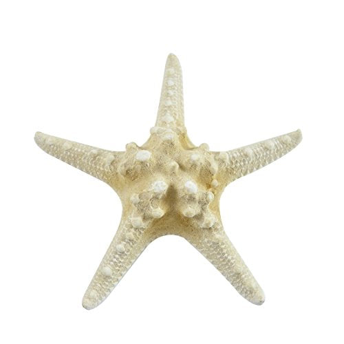 10 Extra Large Large Knobby Star Fish-White 6-8  Inches  Armoured Starfish  - 10 Pieces