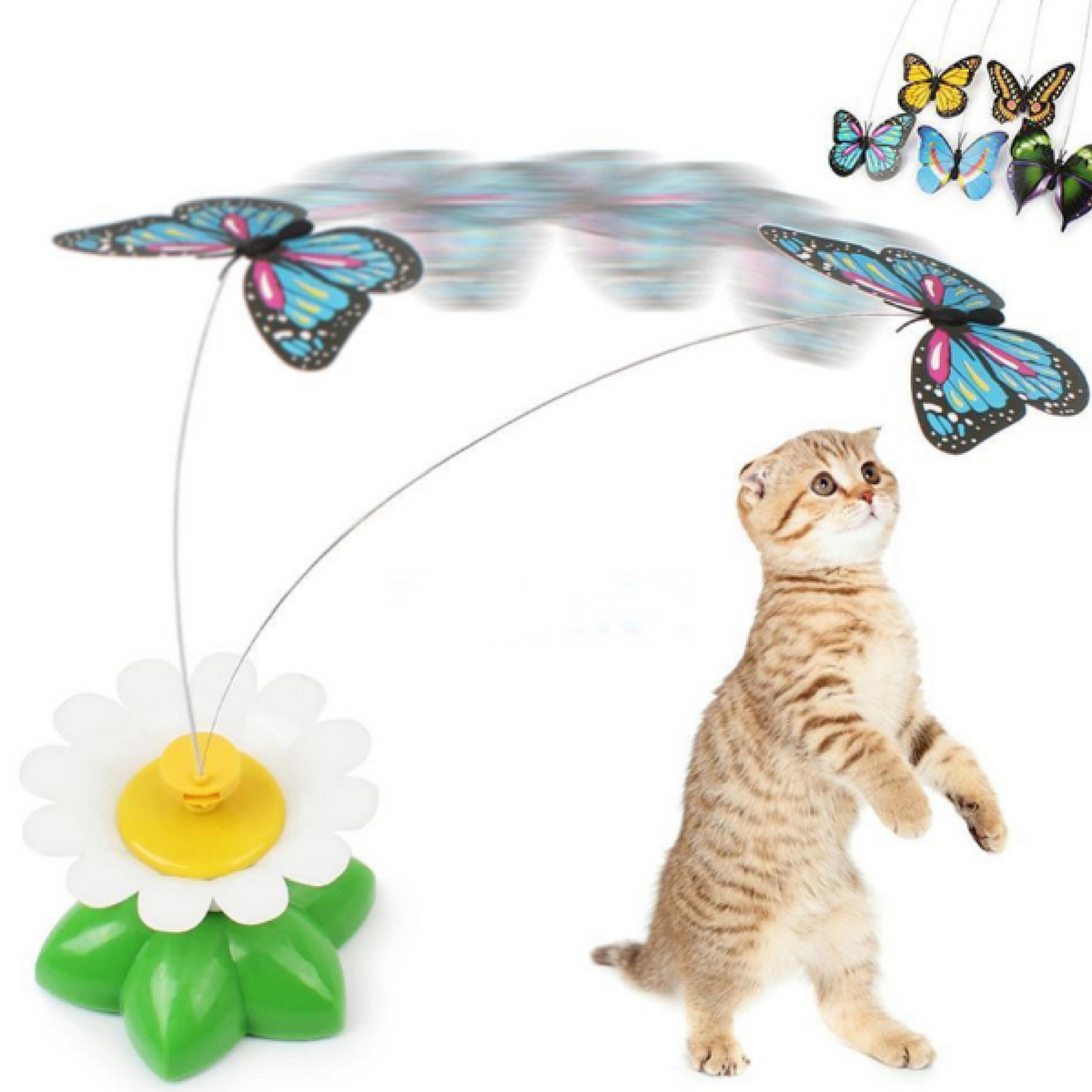 Cat Rotating Butterfly Free+Shipping