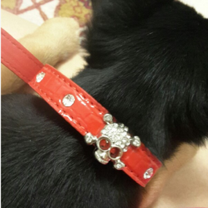 Dog Buckle Collar Free+Shipping