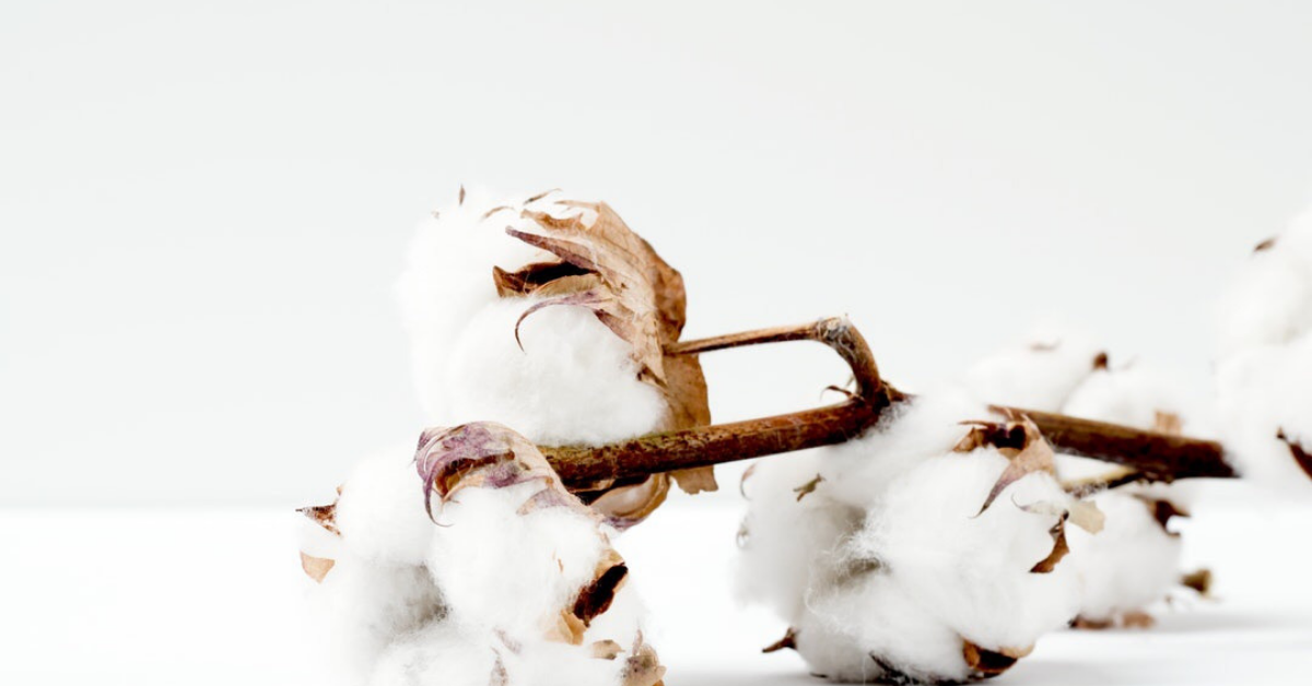 Why 100% GOTS Certified Organic Cotton?