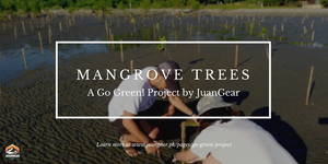 Things you should know about the benefits and importance of planting Mangrove Trees